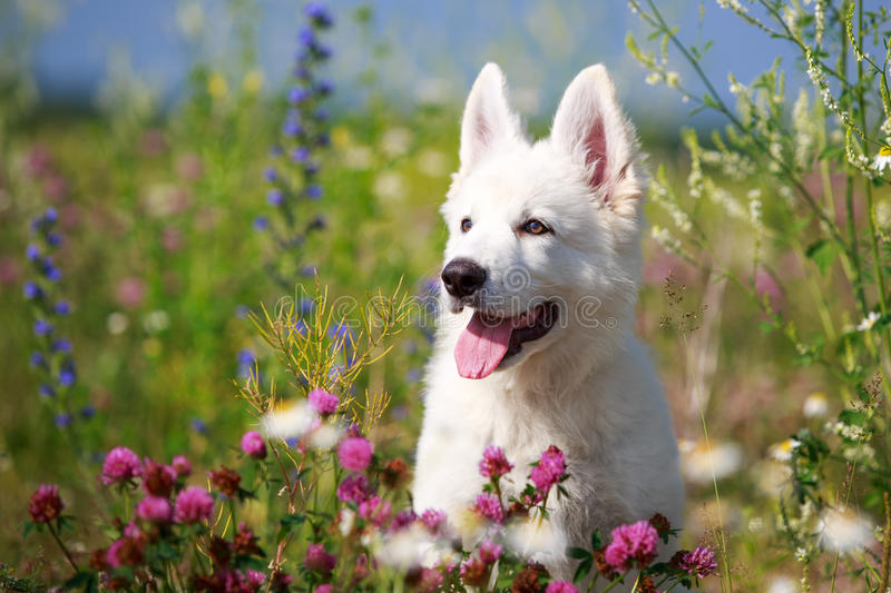 Download Dog on nature stock photo. Image of flower, animal, alley - 32050210