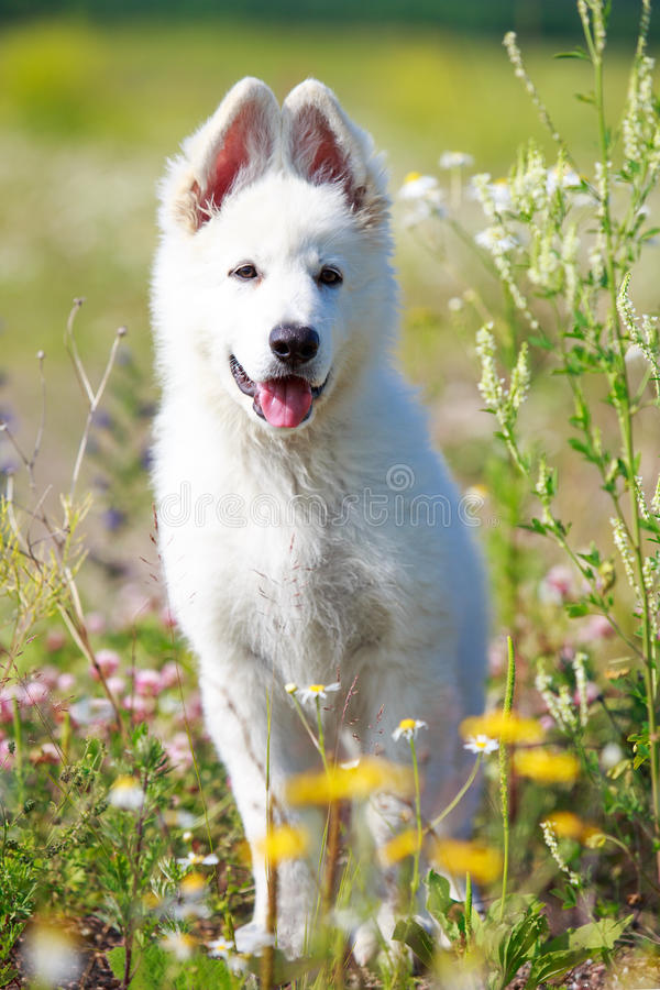 Download Dog on nature stock photo. Image of nature, park, white - 32050478