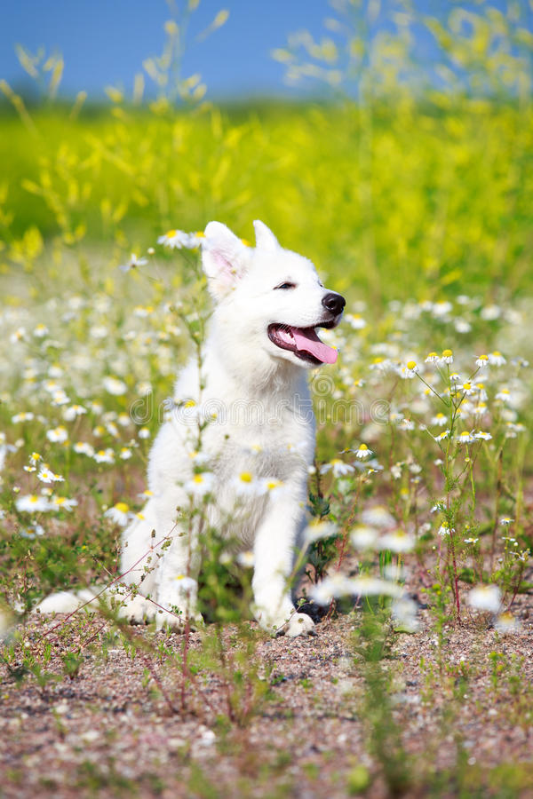 Download Dog on nature stock image. Image of suisse, alley, animal - 32050685
