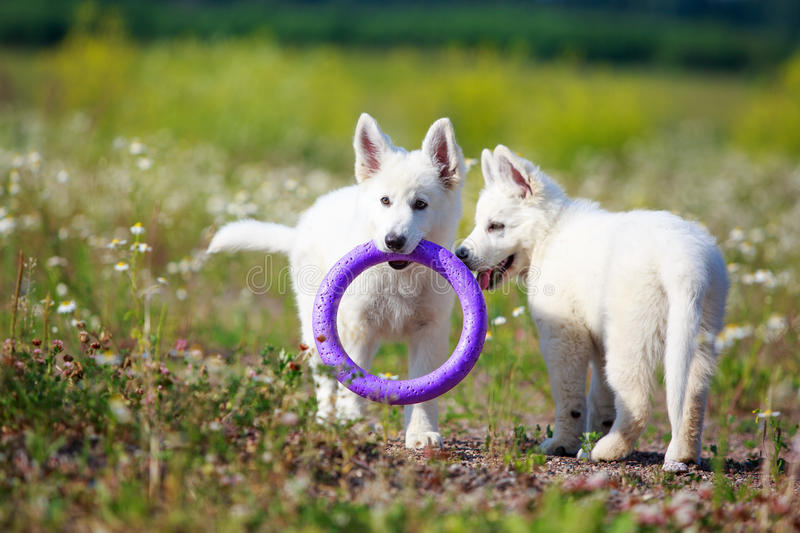 Download Dog on nature stock image. Image of animal, flower, nature - 32051281