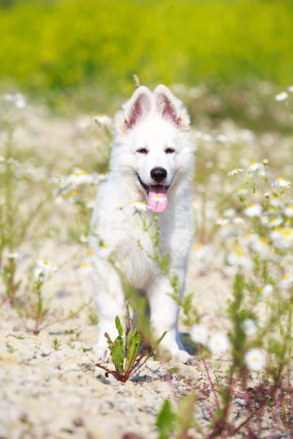 Download Dog on nature stock photo. Image of shepherd, animal - 32051556