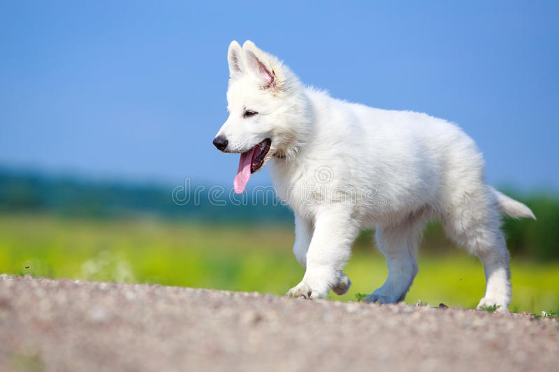 Download Dog on nature stock photo. Image of flower, blanc, suisse - 32052330