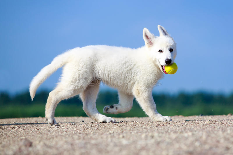 Download Dog On Nature Royalty Free Stock Photo - Image: 32052465