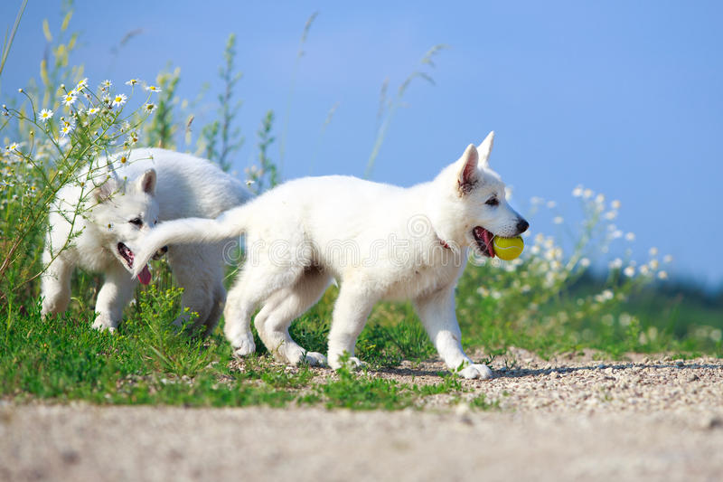 Download Dog on nature stock photo. Image of puppy, shepherd, park - 32052516