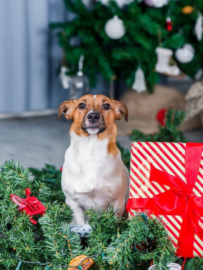 Dog near Christmas tree royalty free stock photos