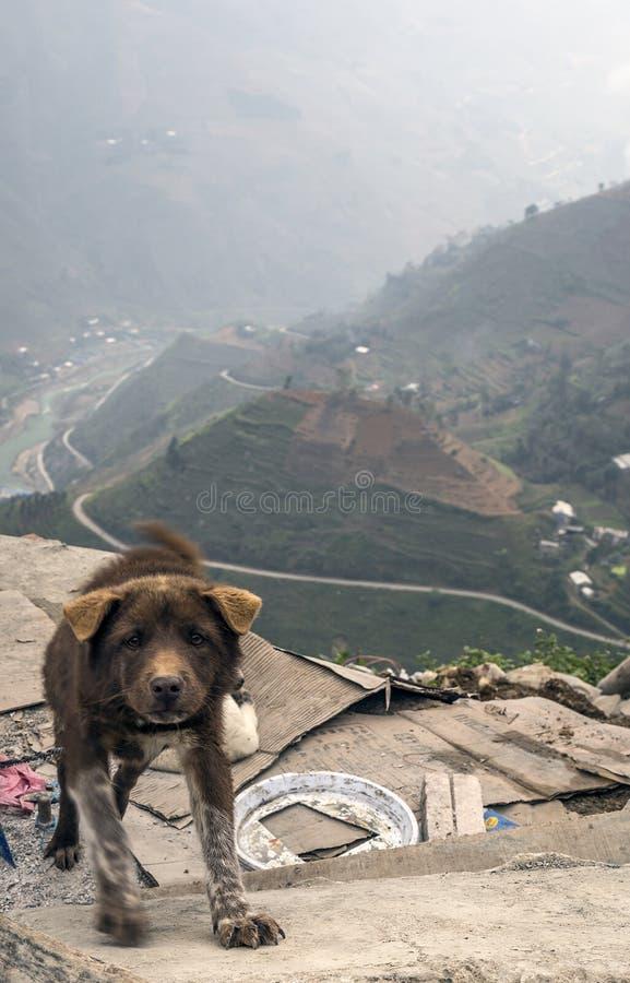 Dog near Ma Pi Leng Landscape vietnam stock image