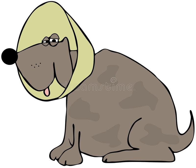 Dog With A Neck Cone Stock Image