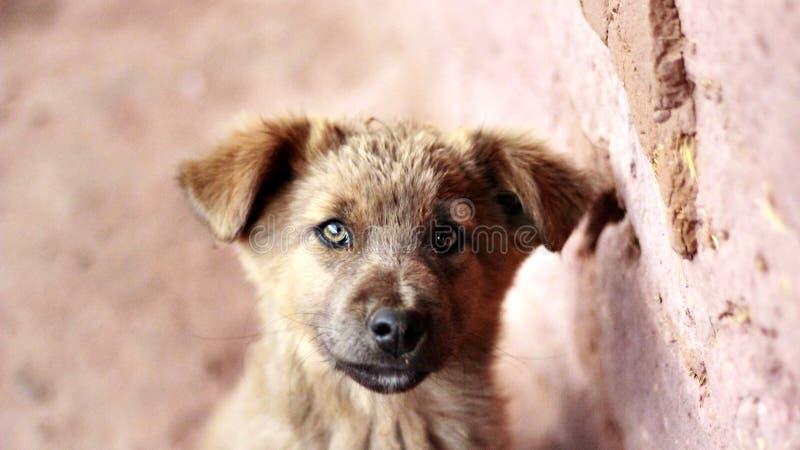 Dog Next To Brick Wall Free Public Domain Cc0 Image