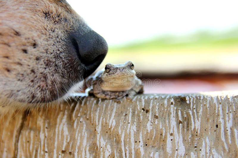 Dog Nose Sniffing Tree Frog Outside stock photos