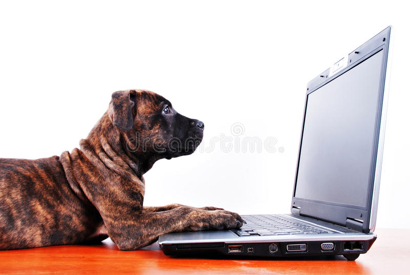 Download Dog and notebook stock image. Image of canine, nature - 12738629