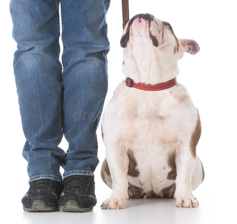 Dog obedience training royalty free stock photos