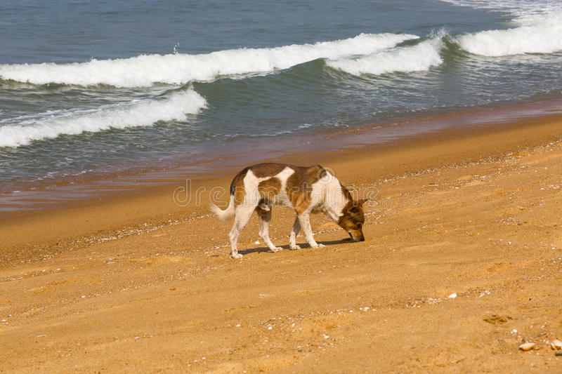 Dog on the ocean royalty free stock image