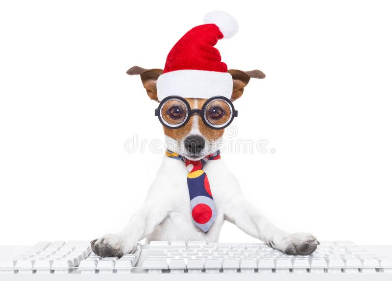 Dog office worker on christmas holidays stock images