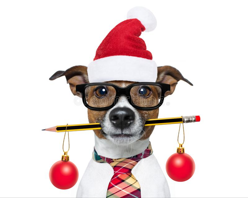Dog office worker on christmas holidays royalty free stock photos