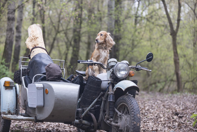 Dog and on old Soviet motorcycle stock photo