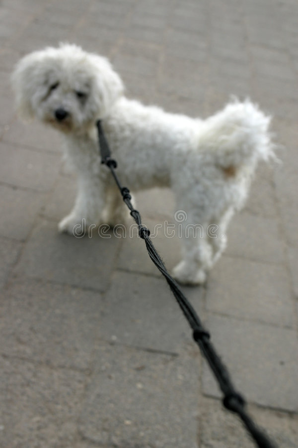 Free Dog On Lead- (Shallow Depth Of Field) Stock Images - 722324
