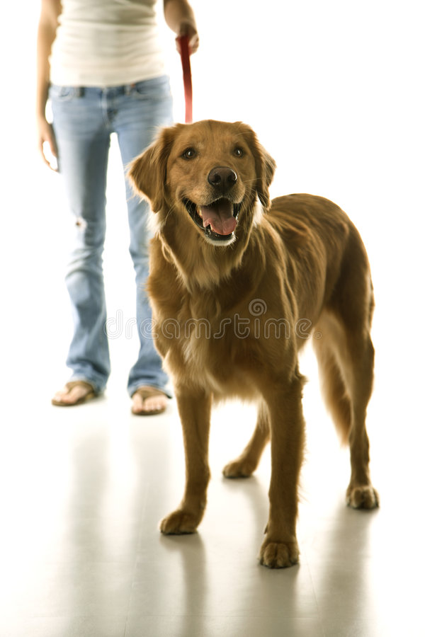 Free Dog On Leash Royalty Free Stock Photography - 2045857