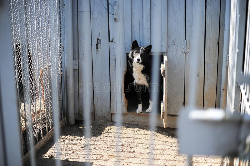 Download Dog in the open-air cage stock image. Image of cage, tranquil - 39512803