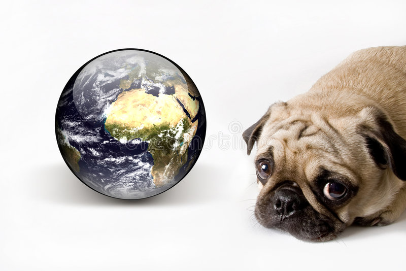 Dog and our world royalty free stock image