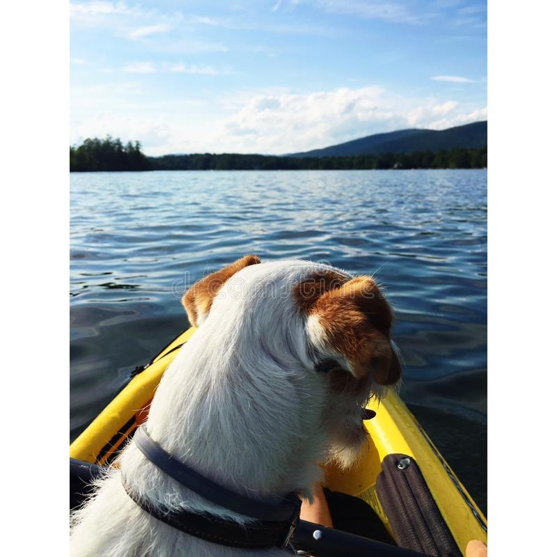 Dog out on the water royalty free stock images