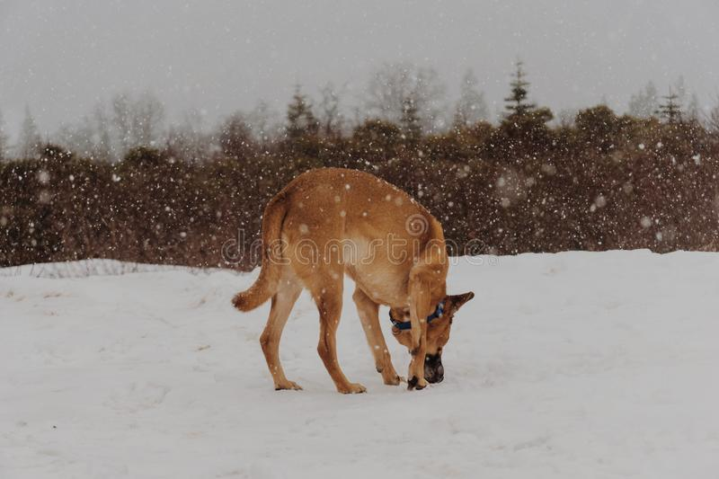 Dog Outdoors In Snow Free Public Domain Cc0 Image