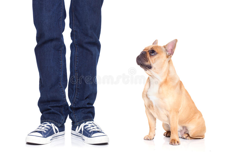 How To Train A Boxer Dog To Sit