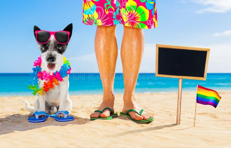 Gay pride dog and owner on   summer holidays royalty free stock image