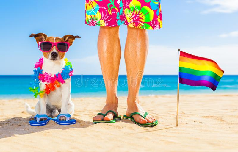 Gay pride dog and owner on   summer holidays royalty free stock images