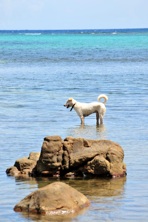 Dog paddling in sea royalty free stock images