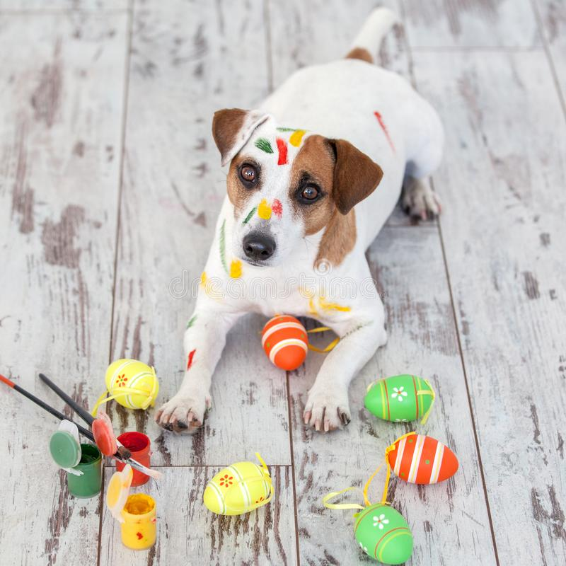 Dog with painted Easter eggs. One pet at home royalty free stock photos