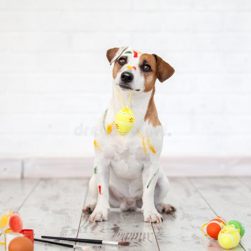Dog with painted Easter eggs. One pet at home stock image