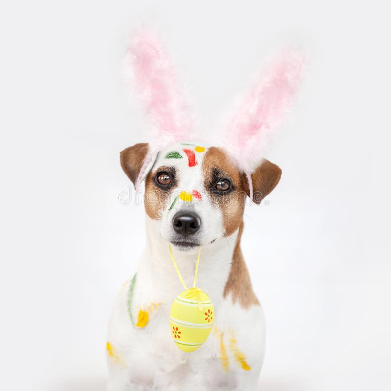 Dog with painted Easter eggs. One pet at home stock photos
