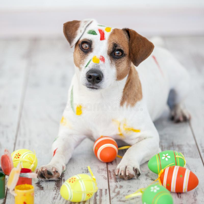 Dog with painted Easter eggs. One pet at home royalty free stock images