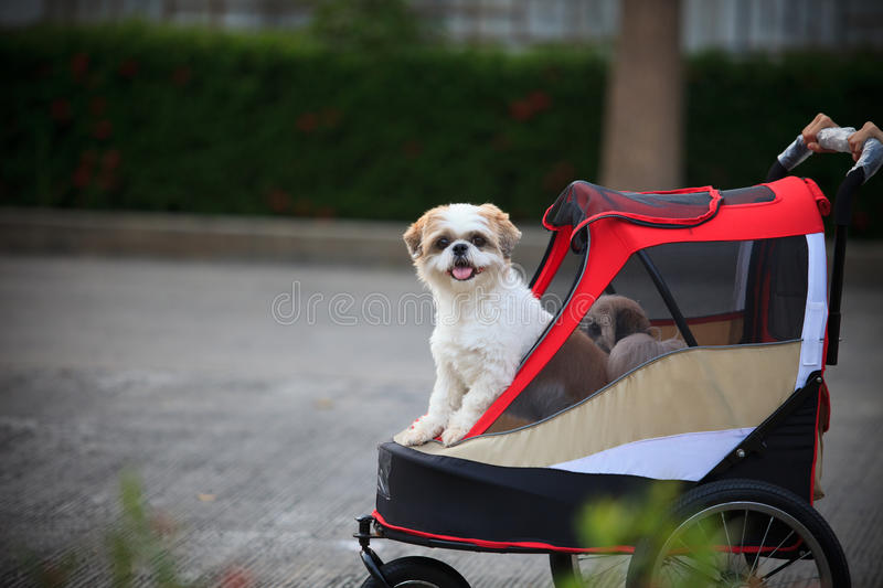 Dog in park royalty free stock image