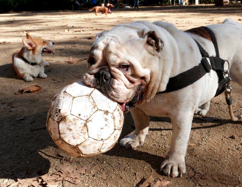 Dog Park Friend: Titan Free Public Domain Cc0 Image