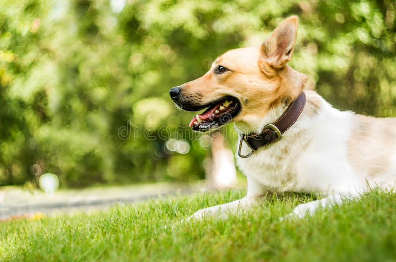 Dog in the park on green grass stock image