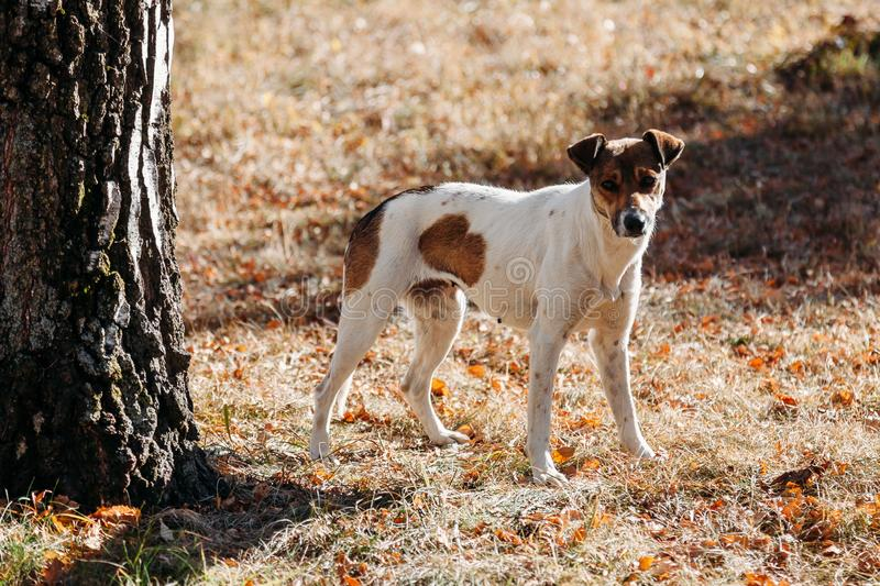 Dog in park. outdoors. Dog in the park. outdoors royalty free stock photos