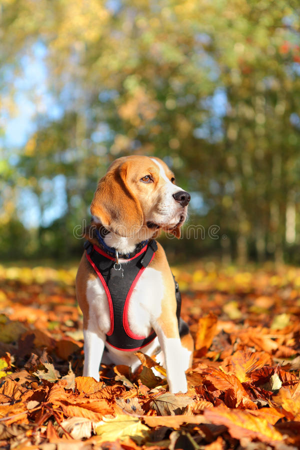 Dog in park royalty free stock photography