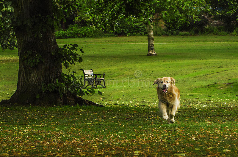 Dog at the park stock images