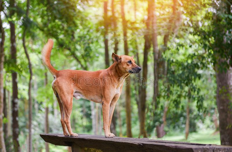 Dog park standing on the wood and nature green tree forest stock photos