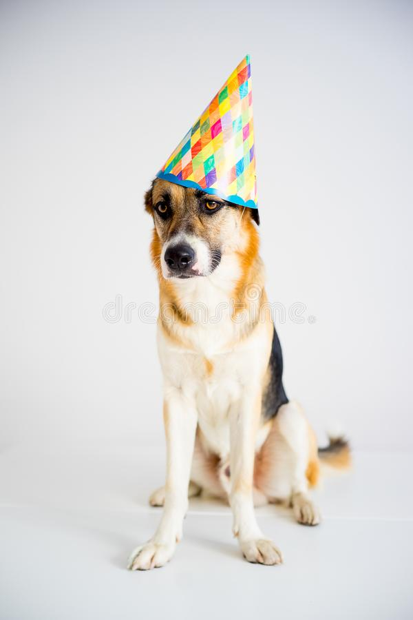 Dog in a party hat stock image