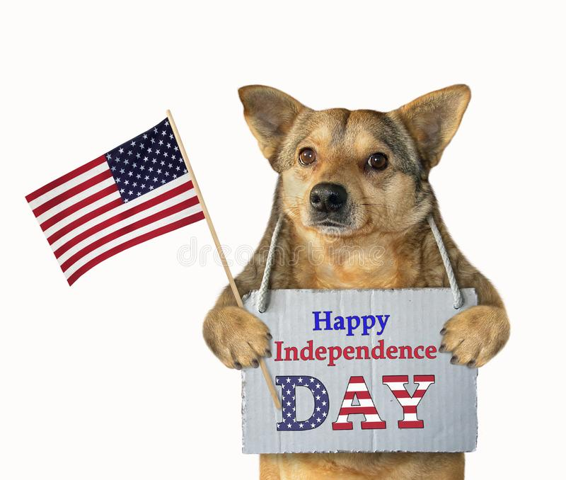 Dog patriot with a flag royalty free stock photo