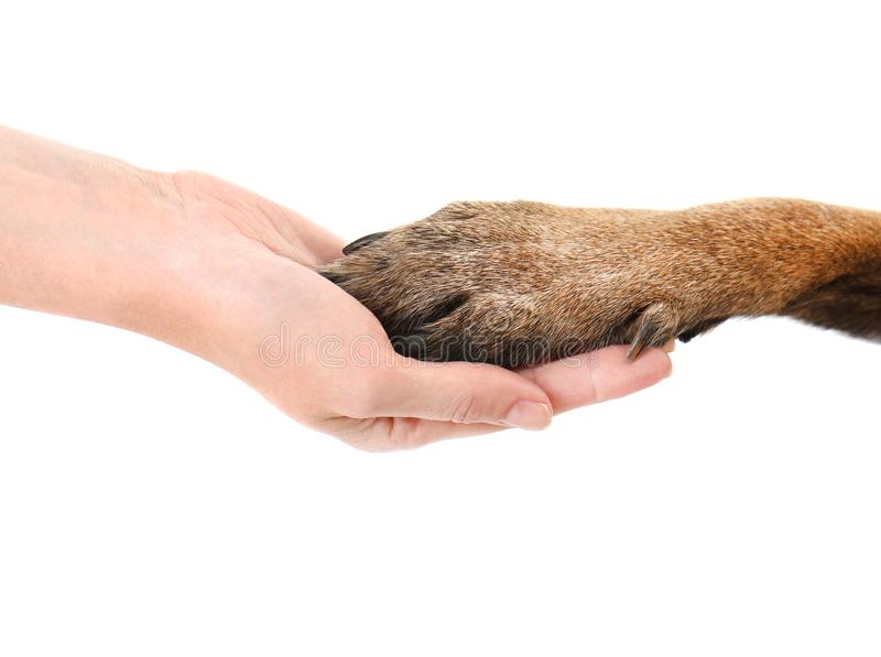 Dog paw and human hand, isolated on white stock photography
