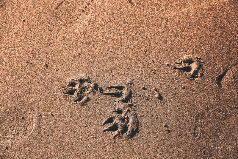 Dog paw print on the beach. Dog paw print on wet sand of Pacific Ocean in California Ocean Beach, San Francisco, CA. Vacation backgrounds close-up. Sunny view royalty free stock photo