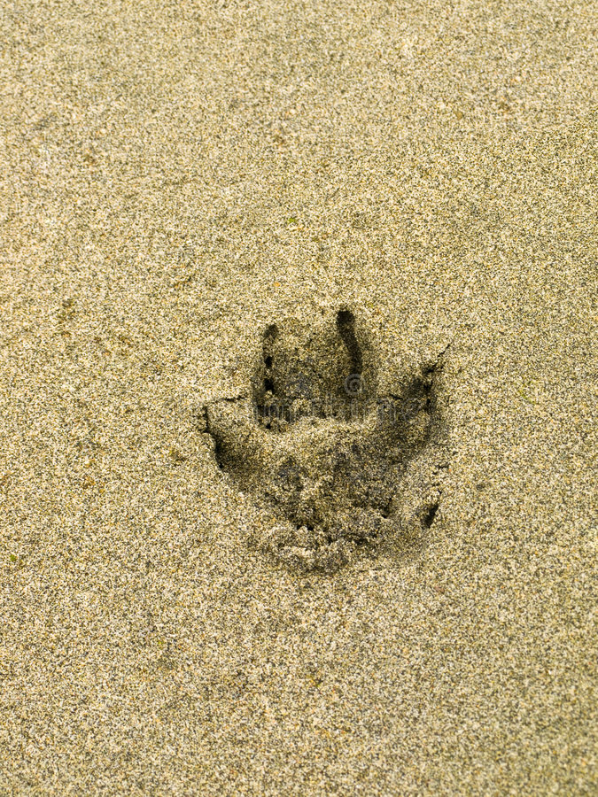 Download Dog Paw Print In The Sand Stock Images - Image: 2872374