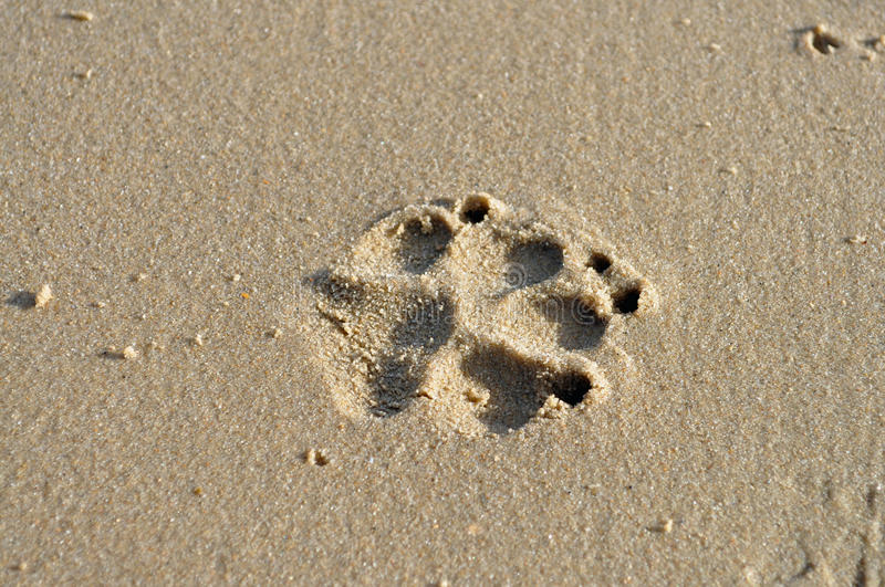 Download Dog paw print in sand stock image. Image of coast, sand - 37196913