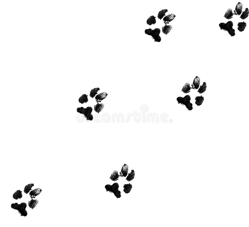 Dog paw prints royalty free illustration