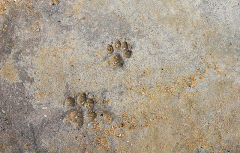 Dog paw prints royalty free stock images