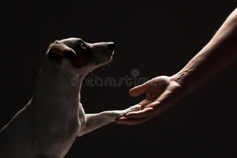 Dog paw takes the man stock photography