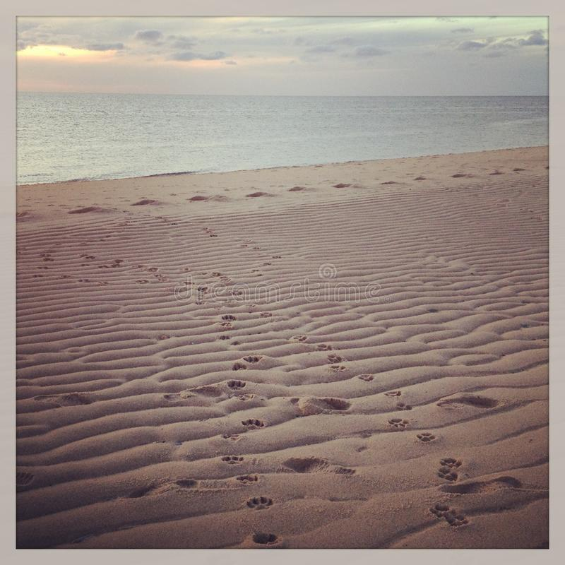 Free Dog Pawprints In Sand On Provincetown Beach Royalty Free Stock Photography - 41798597